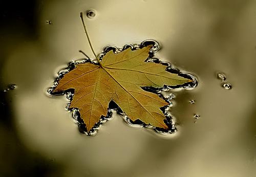 Macro Nature Photogr