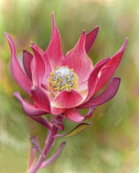 Flower_edited-1