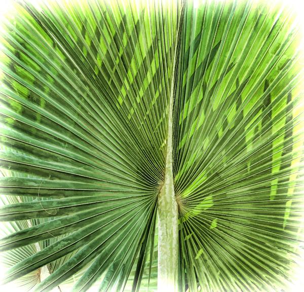 Palm600