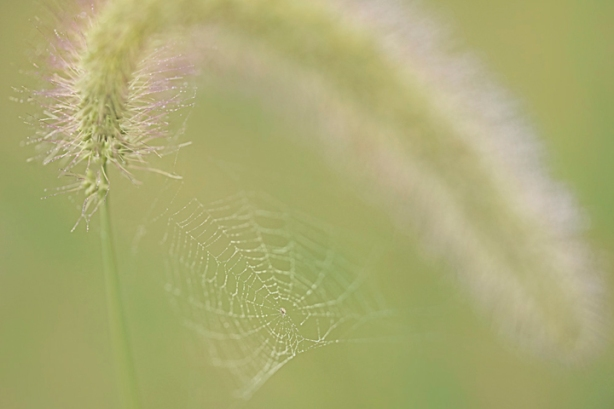 Tiny Dewy Web_edited-1