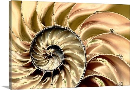 skeleton-swirl,mm1249