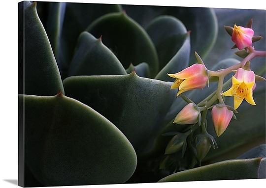 desert-flower-in-cactus-leaves,mm1082